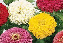 Flowers-Virágok