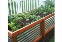 Garden Projects/Ideas