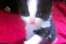 Cats / Cute furry kitties of warms