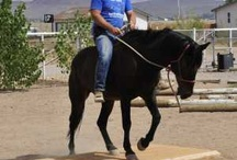 Equines & Equitation