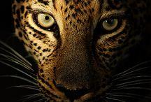 Animals ;)
