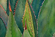 piante grasse art