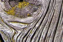 Дерево (цвет, кора, срез)