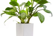 Indoor plants for shade