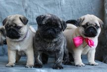 awwwwwww / the cutest little munchkins! puppies + kitties + more - oh my!