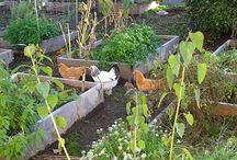 Chicken Coop/Gardening / by Dana Ritterbusch