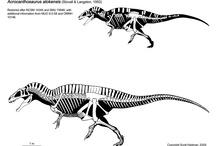 Paleontology - Skelet Drawing