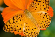 mariposas y natutaleza