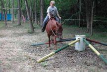 Hest, træning