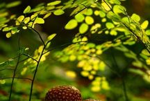 Beautiful Nature / by Patty Russes