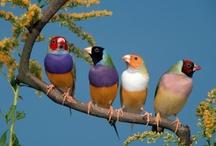birds / by Lisa Miller