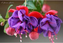 FLOWERS ALBUM / My amateur photography of flowers