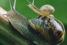 Snails-Šnečci