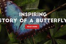 Short Inspirational Stories