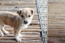 Animal Rights - Petitions