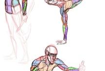 Позы/мышцы