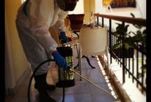 Pest Control / Pest control Greece Korinthos
