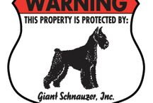 Giant Schnauzer Signs and Stuff / Dog signs for Giant Schnauzer and other dog stuff. http://www.signswithanattitude.com/dog_signs/giant_schnauzer.html