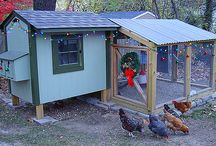 Chicken Coops / by Tina B