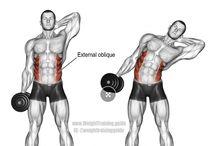 bodybuilding karın