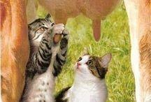 Katzen :-D