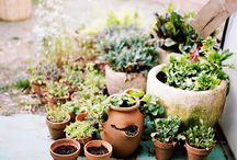 Succulent Ideas / Neat ways to display succulent plants / by Lani