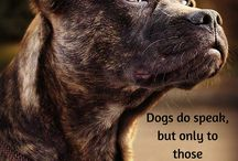 Inspirational Quotes / animal related quotes