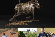 Warthog sculpture / Bronze sculptures made by Hamish Mackie, all signed, dated and numbered editions