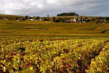"""Album #2 Candidature """"Coteaux, Maisons et Caves de Champagne"""" / En automne, on dirait que les vignes de Champagne se recouvrent de feuilles d'or ! Cet album est un plaisir pour vos yeux."""