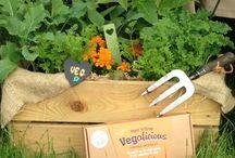 Edible Boxes