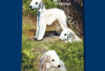 Bedlington Terrier / bedlington terrier