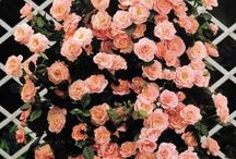 Flower  Garden / by Stephanie Weston