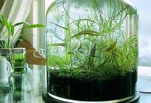 aquascaping terrarium
