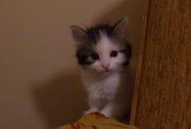Ücretsiz Kedi İlanları