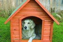 budy dla psa