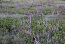 Meadow Gardens / Plan a meadow garden that is beautiful to see and requires very little maintenance.