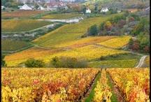 burgundy region / Pictures on Burgundy region