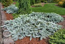 красивые растения / показаны отдельные растения, которые можно использовать в цветниках