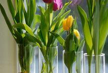 цветы,прикольные штучки.
