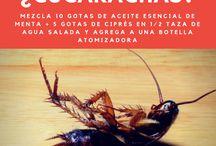 No insectos