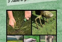 Lawn care / Welcome the Dream Yard Pinterest board for lawn care. We've got lots of great pins for caring for you lawn, repairing a lawn, dealing with lawn problems and much more.