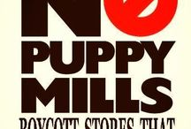 Stop Animal Abuse & Puppy Mills!!!!  / Praying & Hoping that one day all Puppy Mills are shut down! And for the people that are running them to go to prison for the rest of their lives! But I know that's living in a prefect world which we don't!  / by Tammy Selvey Selvey