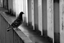 Krzysztof Wosik - Birds