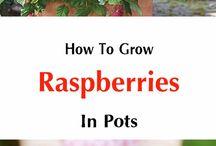Gardening: Fruit trees