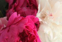 Flowers / by Dora Hernandez