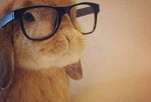 Cute Animals and Optometry