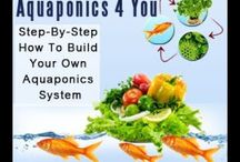 How To Build Your Own Aquaponics