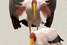 stork-leylek