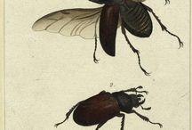Stampe Botaniche Insetti