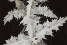 Art: Botanicals